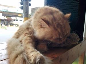Cat Cafe_02